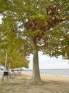 camouflage tree