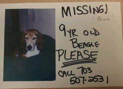 Missing 9-year old Beagle named Bravo
