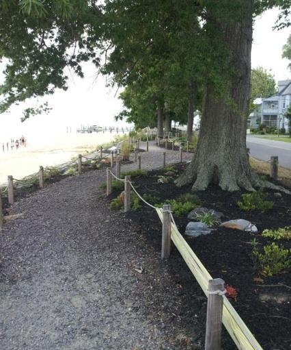Trees along Riverwalk